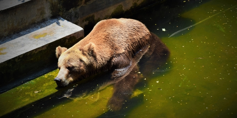 cool bear dreamstime s 91842195 800x400